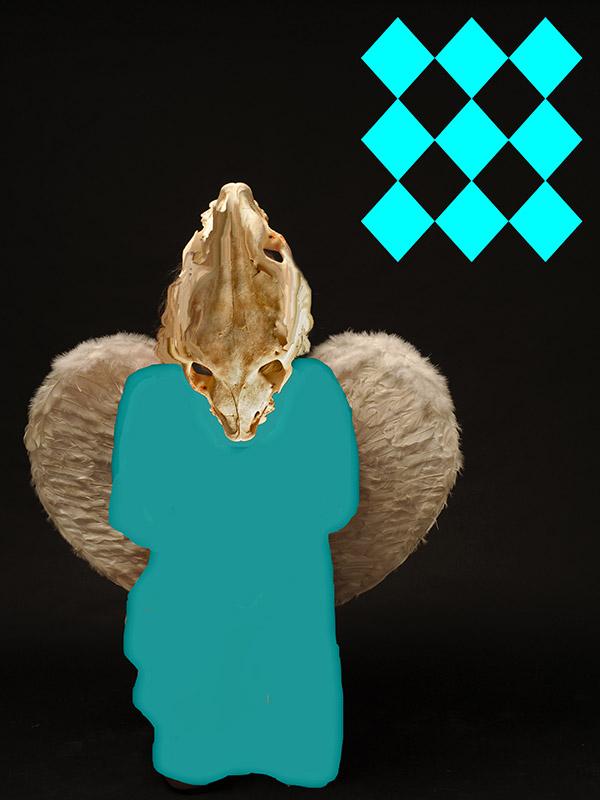 venus-bone